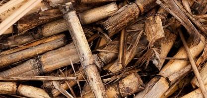 Biomassa pode reduzir escassez energética