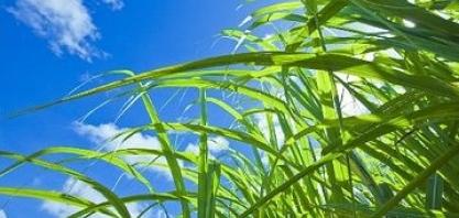 O futuro pertence à produção sustentável