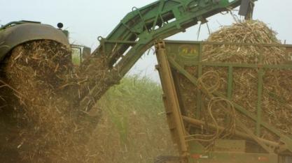 Instituto avalia uso de palha de cana-de-açúcar para gerar energia