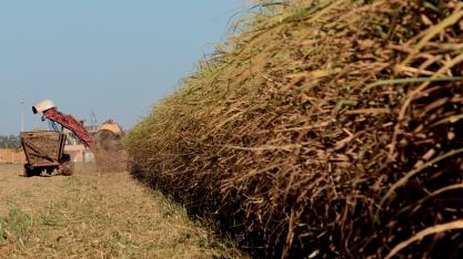 Com produção de 49,2 milhões de toneladas, desafio do setor sucroenergético é a exportação
