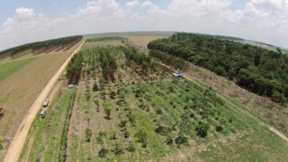 Agronegócio não apoia fim da obrigatoriedade da reserva legal