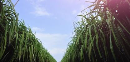 Etanol ajudou a evitar a emissão de 4,2 mi de toneladas de CO2 em 2018 em MG