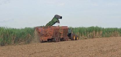 Produtores da região noroeste paulista estão otimistas com a safra da cana deste ano