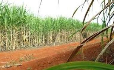Agronegócio perde quase R$ 2 bilhões com soja e cana