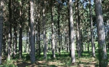 Proposta cria política nacional de biocombustíveis florestais