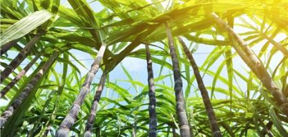 Braskem desenvolve solvente a partir de cana-de-açúcar