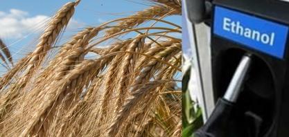 Produção de etanol abre novas oportunidades para os cultivos de inverno