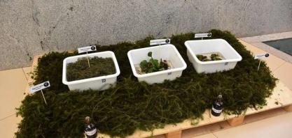 Uso de planta aquática para biocombustível fomenta pesquisa e sustentabilidade em MS