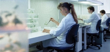 Cientista desenvolve culturas que levam 100% de vantagem