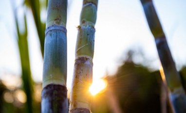 Safra: apesar de aumento na produtividade agrícola, ATR registra queda