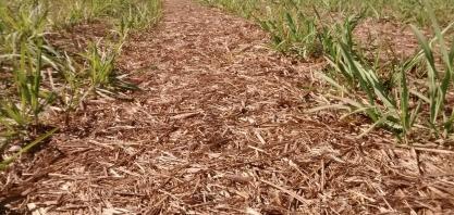 Uso da palha da cana para produzir etanol gera risco ao meio ambiente, diz pesquisa