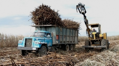 Açúcar do México pode inundar mercado global, diz Rabobank International