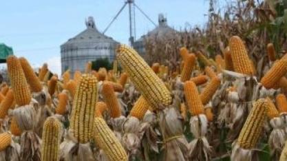 Produção de etanol de milho deve crescer