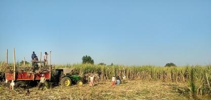 Índia enfrentará três painéis na OMC em razão de subsídios ao açúcar
