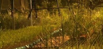 Pesquisa de melhoramento genético da cana-de-açucar ajuda no avanço da produtividade