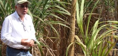 Prêmio Norman Borlaug de Sustentabilidade 2019 vai para pesquisador da Secretaria de Agricultura e Abastecimento