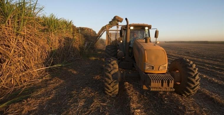 Estudo aponta que produtividade agrícola tem média entre 74,2 e 75,6 TCH na região Centro-Sul do país