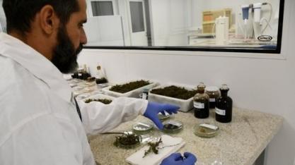 ISI Biomassa inicia identificação de plantas aquáticas para produção de biocombustível