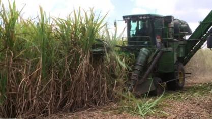 Presidente do Sindaçúcar/PE fala sobre o setor sucroenergético no nordeste brasileiro