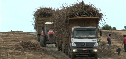 Expectativa é de crescimento de cerca de R$ 18 milhões de toneladas de cana-de-açúcar