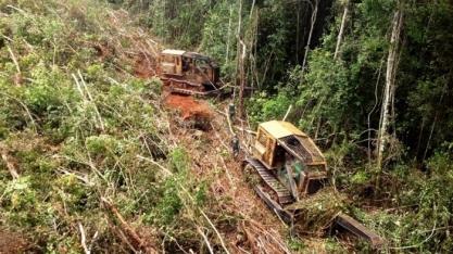Desmatamento afeta imagem do país e causa preocupação