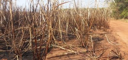 Usina de cana-de-açúcar é multada em quase R$ 800 mil por causar queimada em Tupã