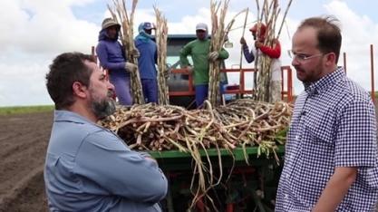 Plantio mecanizado proporciona redução de 30% no custo de renovação de canaviais