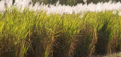 Produtores do Nordeste temem medida de Bolsonaro que amplia importação de etanol sem tarifa