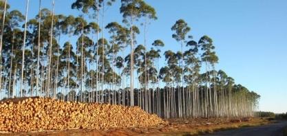 Setor de florestas plantadas mantém tendência de crescimento e fatura R$ 86,6 bilhões em 2018