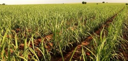 Alta da produtividade agrícola segue neutralizada pela redução na qualidade da matéria-prima
