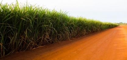 Cana-de-açúcar representa 20% do Valor de Produção das lavouras de MS
