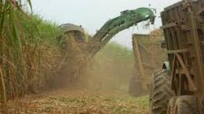 Colheita da cana avança nas regiões produtoras