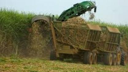 Por Amazônia, deputado dos EUA propõe lei para barrar importações brasileiras