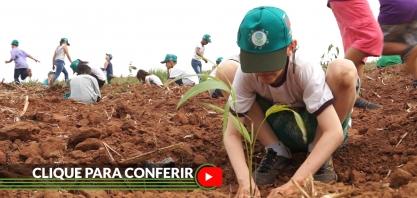 Usina Alcoeste promove plantio de 120 mil mudas de árvores