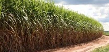LNBR divulga 43ª edição do Boletim de Monitoramento da cana-de-açúcar em São Paulo e Goiás