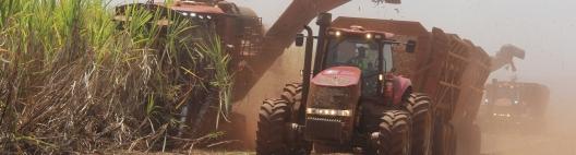 O setor precisará de mais cana para atender a demanda aquecida de etanol