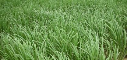Cana-de-açúcar: Com 25 usinas já paradas, safra caminha para o fim com moagem 5% superior