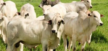 Usina de biodiesel usará gordura de origem animal para produzir óleo