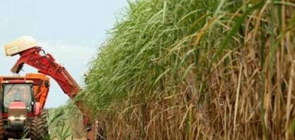 Sindaçúcar-AL: usinas já processaram 3,5 milhões de toneladas de cana