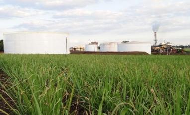 Cepea registra preços firmes para açúcar e etanol