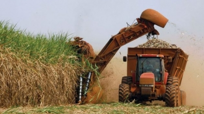 Paraná já fez a moagem de 80% da safra de cana