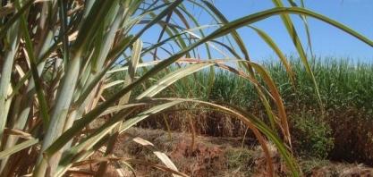 Valor Bruto da Produção Agropecuária de 2019 sobe para R$ 606,2 bilhões