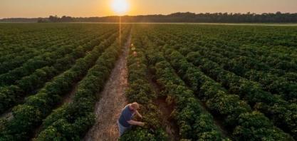Agricultura regenerativa pode ser solução para as mudanças climáticas