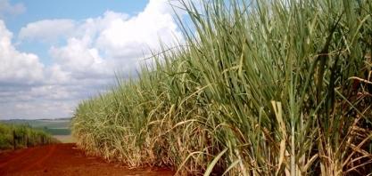 ATR PE: Sindaçúcar divulga preços iniciais da safra 2019/2020
