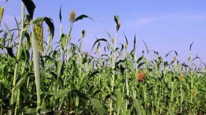 Cientistas transformam biomassa lenhosa em combustível