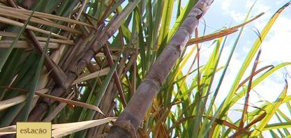 Produtores de cana-de-açúcar em Sergipe esperam melhora do cenário nacional