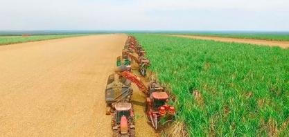 Uberaba é a 3ª cidade do país na produção de cana-de-açúcar