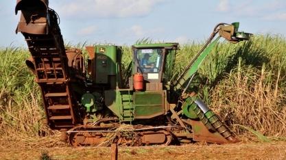 Plantar cana no Pantanal é inviável, dizem usineiros