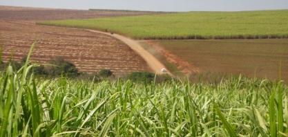 LNBR divulga 45ª edição do Boletim de Monitoramento da cana-de-açúcar em São Paulo e Goiás