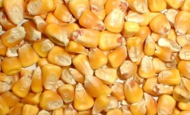 Brasil deve continuar vendo aumento do etanol de milho